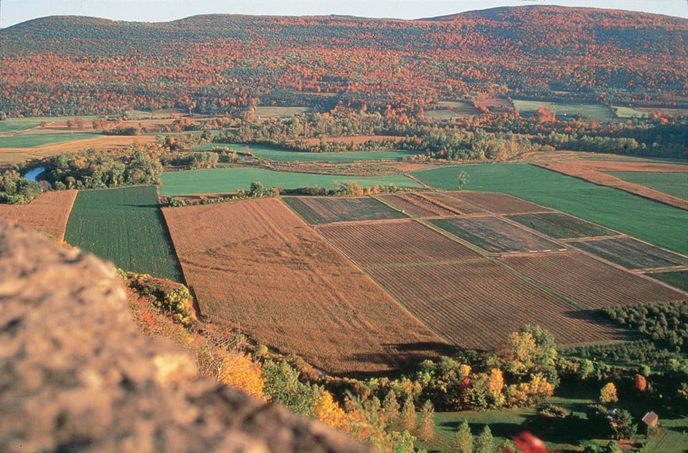 Scenic view of fields