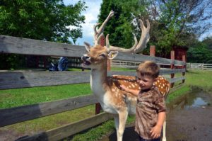 Boy with a deer at Fort Rickey