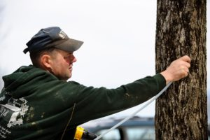 Man tapping a tree